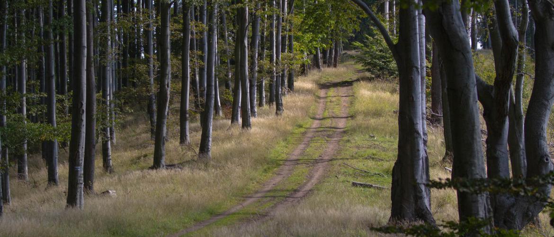 Nógrádi erdőség